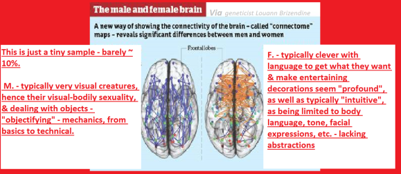 male_female_brain