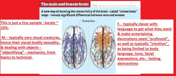male_female_brain